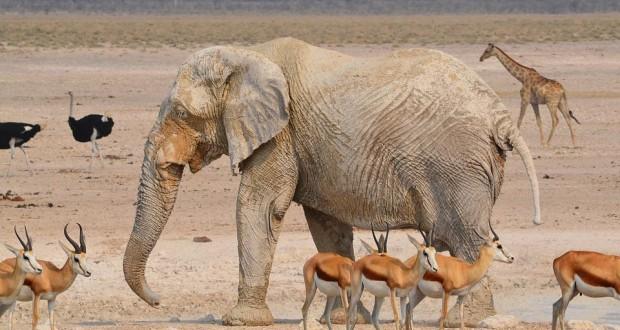 elephant-2451785_960_720